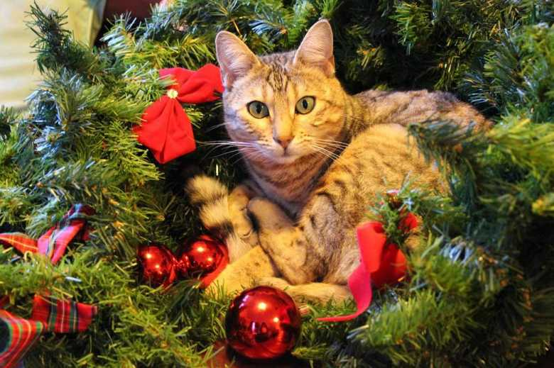 katten in de kerstboom