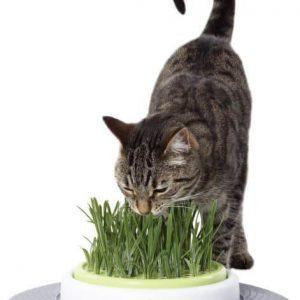 Hagen catit design senses grass garden kit