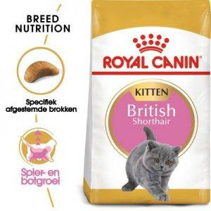 2kg British Shorthair Kitten Royal Canin Kattenvoer