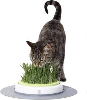 Catit Design Senses Grass Garden Kit - Kattengras - 1