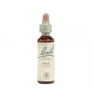 Bach Willow (Wilg) - 20 ml